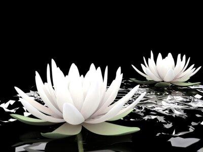 Fototapeta 3d lotosu na wodzie