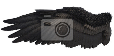 Fototapeta 3D Rendered Fantasy Angel Wings on White Background - 3D Illustration