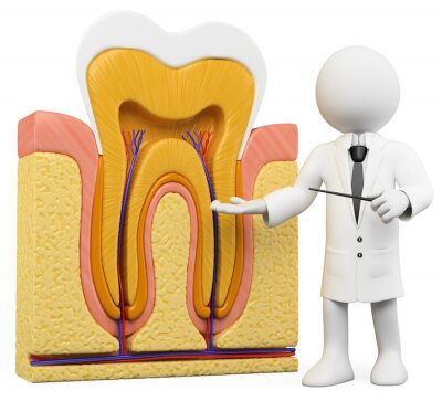 Fototapeta 3D White ludzi. Dentysta z części zęba