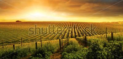 Fototapeta A Beautiful Sunset over a Barossa Vineyard