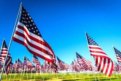 Fototapeta A large group of American flags. Veterans or Memorial day display