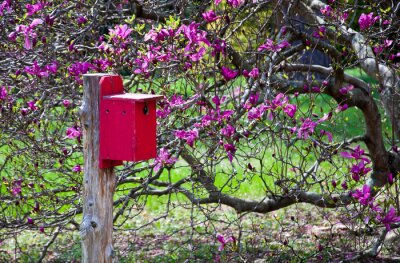Fototapeta A red birdhouse next to a blooming magnolia tree.