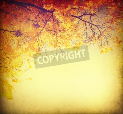 Fototapeta Abstract autumnal background with colorful leaves