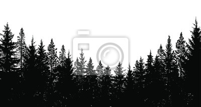 Fototapeta Abstract background. Forest wilderness landscape. Pine tree silhouettes.  Template for your design works. Vector illustration.