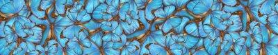 Fototapeta abstract background tropical butterflys Morpho menelaus
