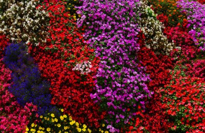 abstract colorful flower background