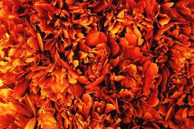 Abstract orange flower