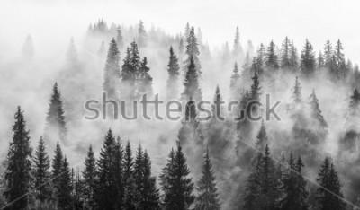Fototapeta Abstrakcjonistyczny czarny i biały krajobraz z mgłą w lesie