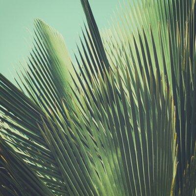 Fototapeta Abstrakcyjna tropikalnych tła archiwalne. Liści palmowych w słońcu.