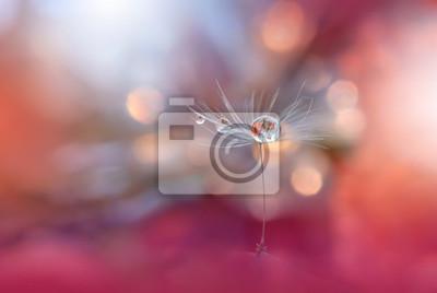 Fototapeta Abstrakcyjne makro fotografii z mniszka lekarskiego i waters.Artistic tła. Farby wykonane z pastelowe tones.Tranquil streszczenie closeup sztuki fotografii.Print for Wallpaper.Floral fantasy projektow