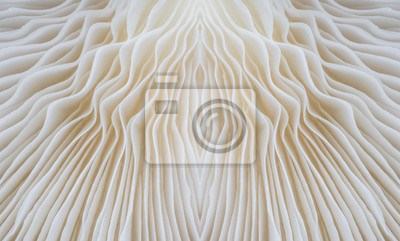 Fototapeta abstrakcyjne tło makro obraz grzyb Sajor-caju.