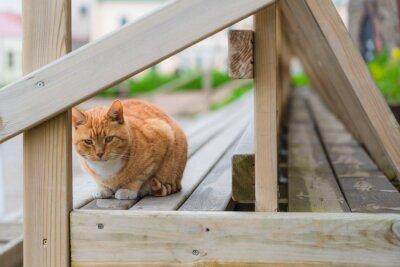 Fototapeta Adorable Orange tabby cat starring people on the bench