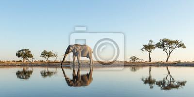 Fototapeta Africa, Botswana, Chobe National Park, African Elephant (Loxodonta Africana) stands at edge of water hole in Savuti Marsh
