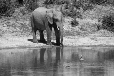 Fototapeta african sceny