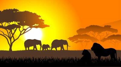 Fototapeta Afrykańskiej sawanny wieczorny krajobraz