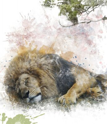 Fototapeta Akwarela Obraz Śpiąca Lion