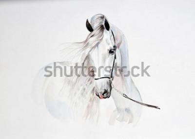 Fototapeta akwarela portret konia andaluzyjskiego