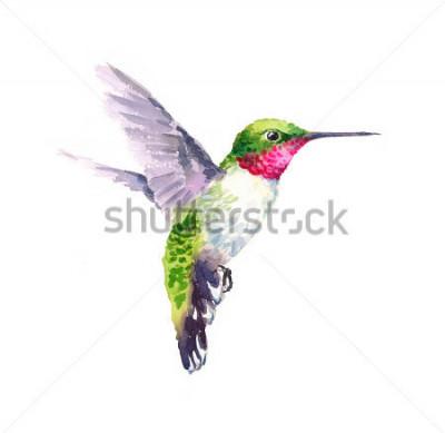 Fototapeta Akwarela ptak latający na rękę na białym tle