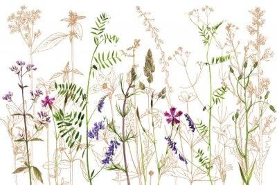 Fototapeta akwarela rysunek kwiatów i roślin