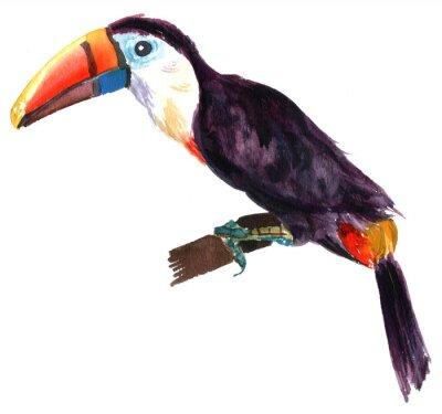 Fototapeta Akwarela rysunek tukan na białym tle