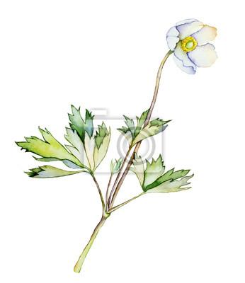 Akwarela z białym kwiatem