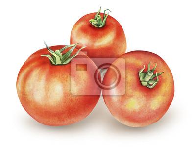 Akwarela z pomidorami