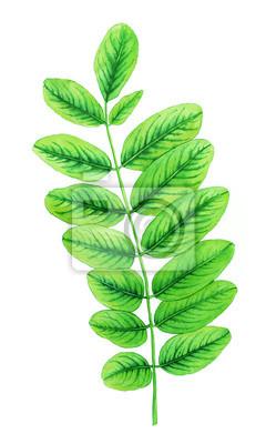 Akwarela z zielonych liści