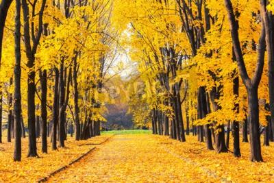Fototapeta Aleja w jasnym parku jesienią