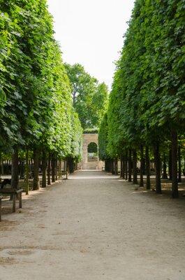 Fototapeta Allée dans le Jardin des Tuileries