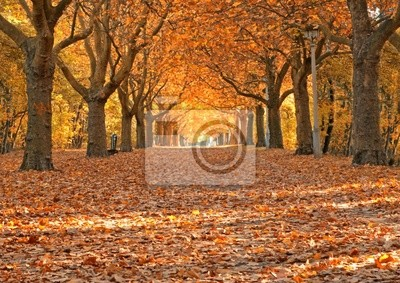 Fototapeta Allee im Herbst