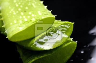 Aloe liści z kropli soku z refleksji