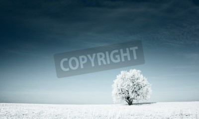Fototapeta Alone frozen tree in snowy field and dark blue sky