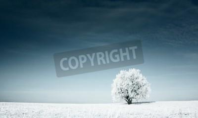 Fototapeta Alone frozen tree in snowy field and dark blue sky
