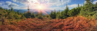 Fototapeta Alpejski jesień w Gorgany