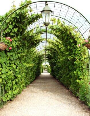 Fototapeta altana winorośli w Hiszpańskim ogrodzie