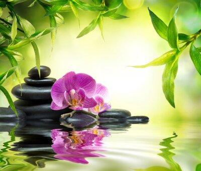 Fototapeta Alternatywą masażu w bambusa ogród na wodzie
