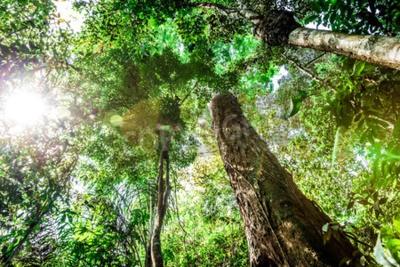 Fototapeta Amazon Rainforest, Brazylia, Ameryka Południowa