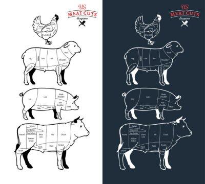 Fototapeta Amerykańskich (US) kawałków mięsa Schematy