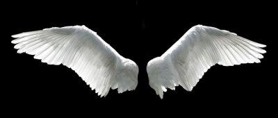Fototapeta Angel wings samodzielnie na czarnym tle