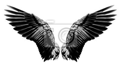 Fototapeta Anielskie skrzydła, naturalne czarne skrzydło upierzenie na białym tle z wycinek części