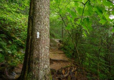 Fototapeta Appalachian Trail Blaze In Smoky Mountains