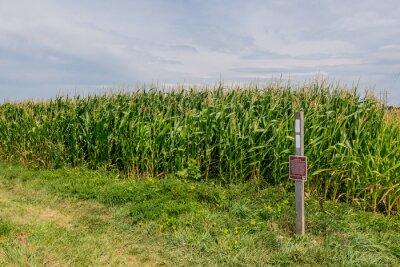 Fototapeta Appalachian Trail Double Blaze at Corn Field