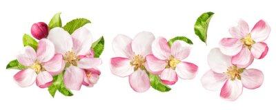 Fototapeta Apple drzewa kwiaty z zielonymi liśćmi. Ustawić Wiosenne kwiaty