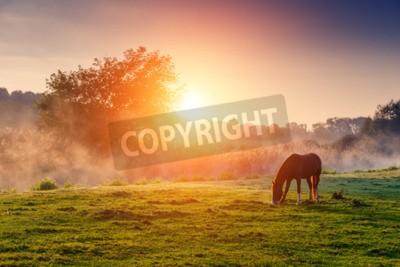 Fototapeta Arabskie konie pasące się na pastwiskach o zachodzie słońca w Orange słonecznych promieni. Dramatyczna scena mglista. Karpaty, Ukraina, Europa. Piękno świata.