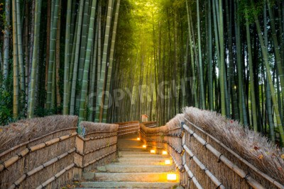 Fototapeta Arashiyama Bamboo Forest w Kioto w Japonii
