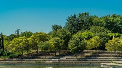 Fototapeta arboles en fila sobre las escaleras del parque , pequeños arboles sobre los escalones