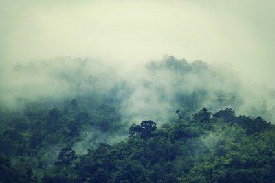 Fototapeta archiwalne zdjęcie z lasów tropikalnych