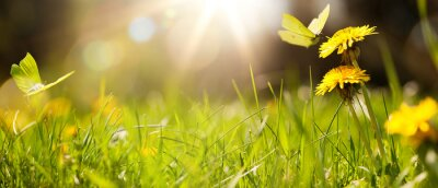 Fototapeta art abstract spring background or summer background with fresh grass