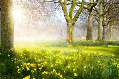 Fototapeta Art wiosenne kwiaty w parku; Wielkanoc krajobrazu