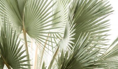 Fototapeta Arty closeup picture of palm leaves, abstract pattern, nature background, retro toned poster